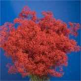 Buy wholesale Gypsophila dyed red for delivery direct to any UK address - wholesaled in Batches of 25 stems. Ideal for wedding flowers, floral design & corporate events. No minimum order required - Floral accessories also available. Green Wedding, Wedding Flowers, Gypsophila, Cut Flowers, Red And White, Floral Design, Herbs, Plants, Flower Ideas