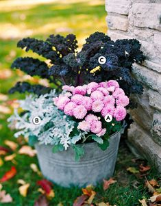 Add unexpected colors and contrasts to your fall landscape with container garden plants that feature soft pink flowers or silver leaves. #fallcontainergarden #containergardenplans #fallgardening #flowerpots #bhg Fall Container Plants, Fall Containers, Container Design, Container Flowers, Container Gardening, Fall Flower Pots, Seasonal Flowers, Fall Flowers, Flower Landscape