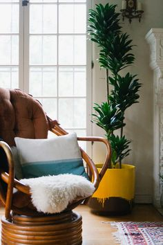 cushion plant and window by Oldbrandnew @DABITO