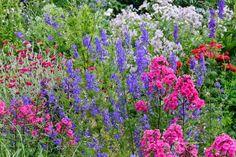 Garden phlox, Phlox paniculata, rocket larkspur, Consolida ajacis, Lychnis Coronaria