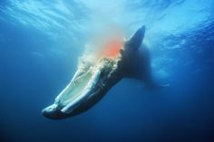 When whales decay the seafloor, their enormous carcasses give life to mysterious worlds inhabited by an assortment of bizarre creatures.