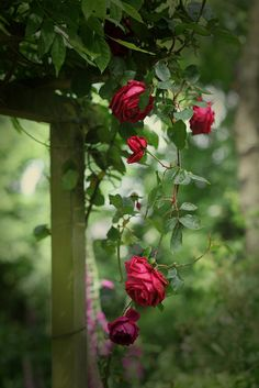 """....But the rose remembers the dust from which it came.""    ~Edna St. Vincent Millay"