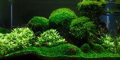 HAC 2014 Galéria - Hungarian Aquascaping Contest HAC 2014