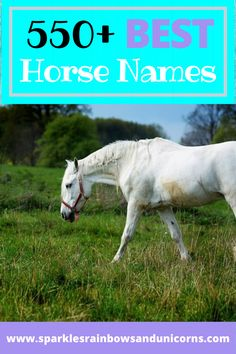 Best Horse Names Funny Horse Names, Best Horse Names, Horse Riding Tips, Horse Tips, Disney Horses, Buy A Horse, Getting A Kitten, Pokemon, Horse Facts