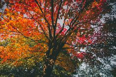 """""""Days decrease, / And autumn grows, autumn in everything.""""  ― Robert Browning  In the Fall Nature shows its artistic side. Art informs. We are informed of the beauty of the world by fall."""