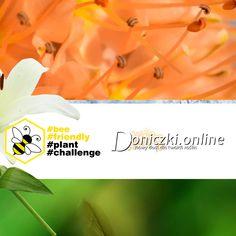 👉Czy znacie i lubicie internetowe challenge?😲 Kojarzycie akcje, jak Movember czy ALS Ice Bucket Challenge, które angażowały miliony i budowały świadomość problemów zdrowotnych czy społecznych? Teraz mamy dla Was propozycję zaangażowania się w pomoc ginącym pszczołom.🐝 W skrócie chodzi o to, aby w swoim ogrodzie, na tarasie lub balkonie zasadzić roślinę przyjazną pszczołom, zrobić zdjęcie albo film i opublikować go w swoich mediach społecznościowych z hashtagami #bee #friendly #plant.. Bee, Challenges, Film, Plants, Movie, Honey Bees, Film Stock, Bees, Cinema