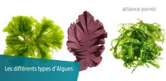 Outre leurs vertus revitalisantes, les algues possèdent des propriétés hydratantes qui permettent de retarder les effets du vieillissement.