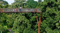 Canopy from the Treetop Walkway