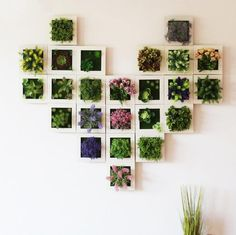 Succulent Wall Hanger Frame Our Succulent Wall Hanger Frames are beautiful as a single item display or you can Mix and Match these faux succulent frames in a myriad of combinations to add awe-inspiring wonder to any wall! Artificial Plant Wall, Artificial Flowers, Decorating With Sticks, Succulent Frame, Succulent Plants, Succulent Display, Succulent Wall Art, Hanging Plant Wall, Plant Wall Decor
