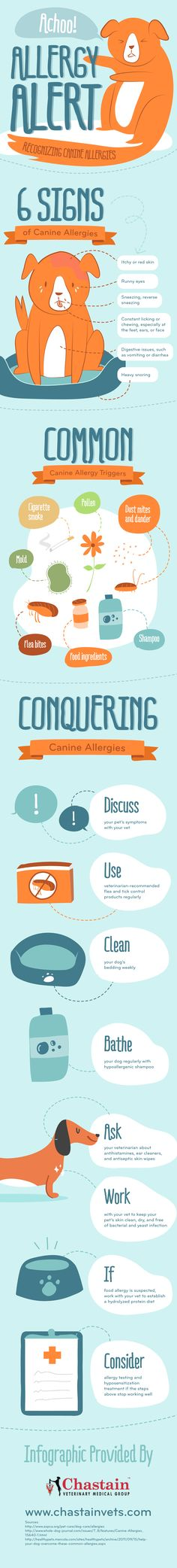 Recognizing canine allergies infographic - very helpful!