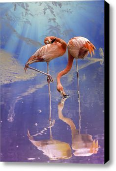 Two pink flamingos highlighted in blue and purple fantasy lighting, taken at the Saint Louis Zoo . by Bill Tiepelman Flamingo Photo, Flamingo Art, Pink Flamingos, Love Birds, Beautiful Birds, Animals Beautiful, Flamingo Pictures, Flora Und Fauna, Lighted Canvas