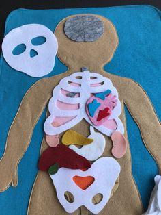Educational Felt Human Anatomy/ Parts of the Body/