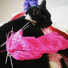 Cosmo knows that if he sits on my lap there's a good chance he will have #knitting draped over him at some point  #catsofinstagram #blackcat #handknitsocks #knittersofinstagram #nemesissock #knitpicks #strollglimmer #pink #knitty #ravelry by creepingthyme