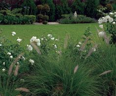 Arquitectura Paisajista, rosales blancos y gramineas