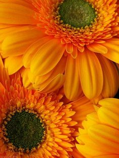 Photographs of plants, animals, landscapes, and other features of the earth, as opposed to human creations. Amazing Flowers, Pretty Flowers, Floral Photography, Nature Photography, Lilies Of The Field, Daffodils, Gerbera Daisies, Sunflowers, Orange You Glad