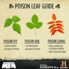 Poison Leaf Guide - Poison Ivy, Poison Oak, Poison Sumac
