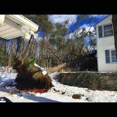 So this happened today. Just when you think trees are majestic they come crashing down on your home.  Thank God no one was injured and for insurance. This is why I suggest removing trees from your property.  #Timber #FallenTree #Tree #Wood #Logs #Snow #Blizzard2016 #Jonas by baron2099