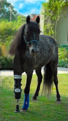 Molly, the horse with an artificial leg.  A most heartwarming story and beats the heck out of murder, politics and terrorists!  I love that her artificial footprint is a smiley face.