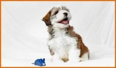 How Far Goes Your Love For Dogs? - dogisto.com