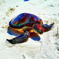 Colourful rainbow turtle