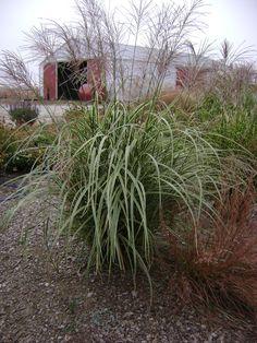 Picket Fence Greenhouse -Iowa Gardening /ornamental Grasses