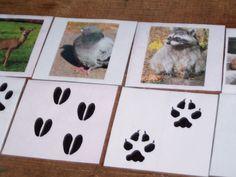 animal tracks cards