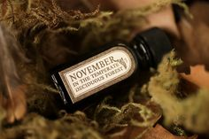 November in the Temperate Deciduous Forest captures the familiar comfort and stillness of late autumn. This blend opens with the atmosphere of a