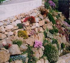 Alpine and rockery plants