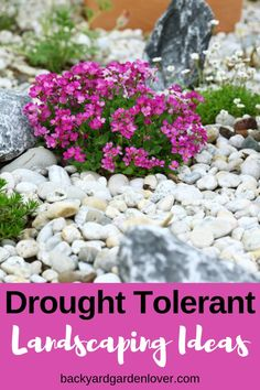 Want to use less water in your landscape? Try changing your existing landscape into a xeriscape, or drought tolerant landscaping. Garden Shrubs, Garden Landscaping, Landscaping Ideas, Landscaping Software, Modern Landscaping, Diy Herb Garden, Herb Garden Design, Garden Bed, Flowers Perennials
