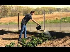 Jak na pěstování jahod - YouTube