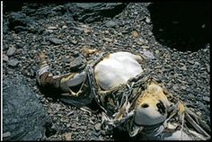 Image detail for -Dead Bodies on Mount Everest - MYFAVOURITESTUFFS.COM