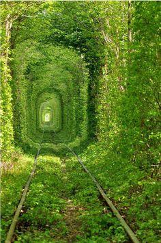 Train tree tunnel in Ukraine.