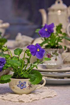 Flowers in teacups, love!