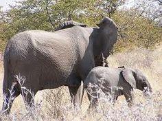 Tours and Safaris through Chizarira National Park Zimbabwe, Safari, National Parks, Elephant, Tours, Elephants