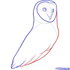 How To Draw A Barn Owl Step 8