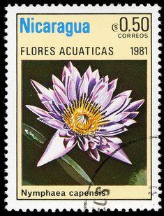 Stamp Nicaragua 1981