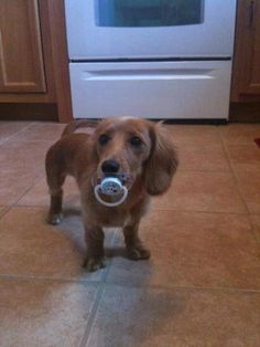 Holly did this with my nephews pacifiers when she was a baby but we never got a picture :( so cute!