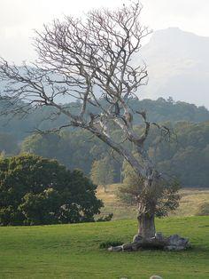 Wray Castle Castles In England, Castle Ruins, Always Learning, Lake District, Landscape Art, History, Travel, Historia, Viajes