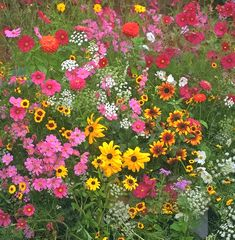 Learn how to decide when is the best time to plant wildflowers. Planting Flowers From Seeds, Growing Flowers, Exotic Flowers, Beautiful Flowers, Wild Flower Meadow, Line Flower, Wildflower Seeds, Bulb Flowers, Flower Aesthetic