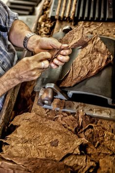 cigar manufacturing process in the Dominican Republic. Photographer - Brian K Crain