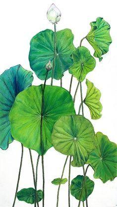 July Lotus Leaves, mixed media drawing on paper Watercolor Lotus, Lotus Painting, Watercolor Flowers, Watercolor Paintings, Leaf Paintings, Lotus Kunst, Lotus Art, Leaf Drawing, Plant Drawing