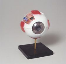 How to make a model eyeball using a styrofoam ball (tutorial)