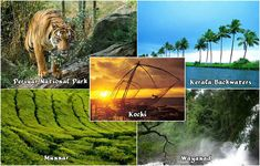 #PERIYAR NATIONAL #PARK - the most #fascinating wild life