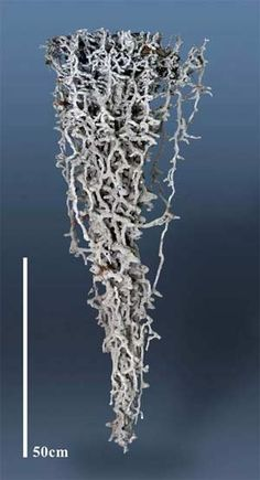 :::: PINTEREST.COM christiancross :::: Underground ant colony structure