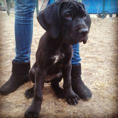 3 months puppy