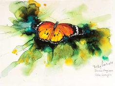 African-Monarch-Bodo Meier