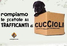 Nuovo rapporto Zoomafia LAV: ogni ora un reato contro gli animali  3 luglio 2012