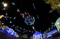 Walt Disney World - Hollywood Studios - The Osborne Family Spectacle of Lights