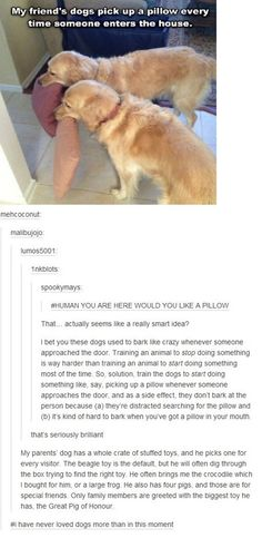Training Your Dogs, According to Tumblr