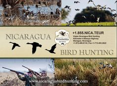 Find out why most hunter prefer now to hunt at Nicaragua..